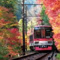 Local train trip around famous autumn foliage sites